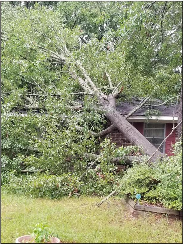 Tropical Storm Causes Damage in Calhoun County