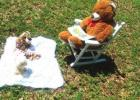"Hunt for ""Bears"" in Calhoun County"